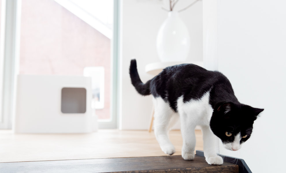 Recensioni sulla lettiera per gatti Dome