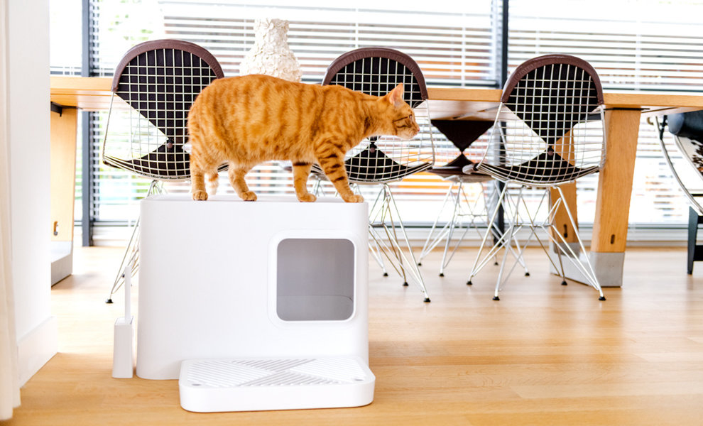 5 reasons to buy the Dome cat litter box