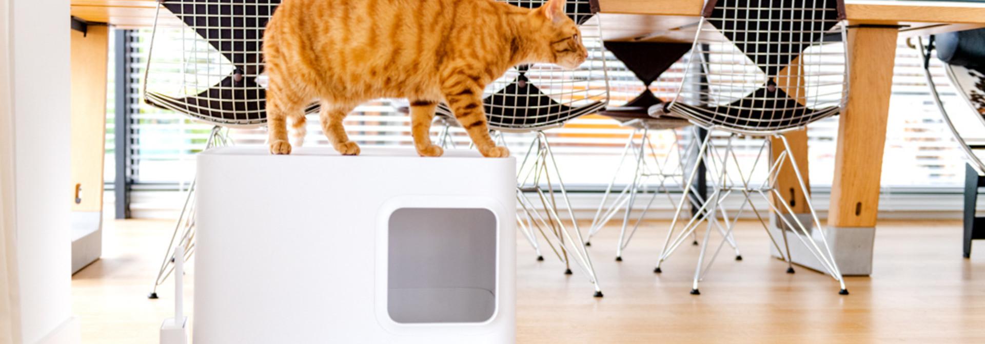 5 Gründe, die Dome Katzentoilette zu kaufen