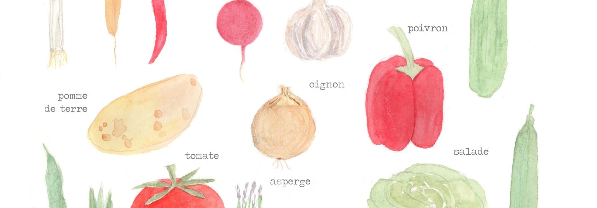 Légumes de Saison  - giclée