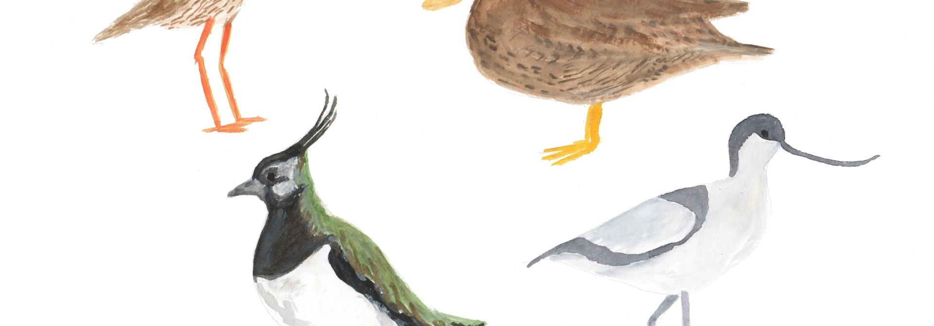 Weidevogels - giclée