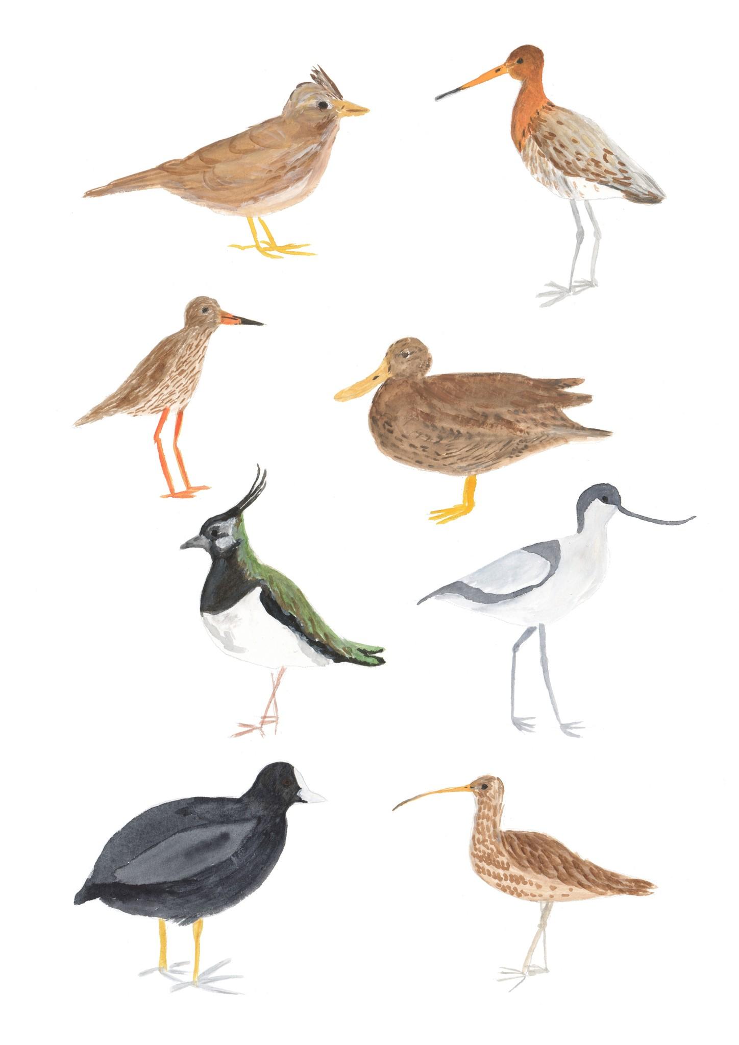 Weidevogels - giclée-1