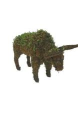 Artopya Bull