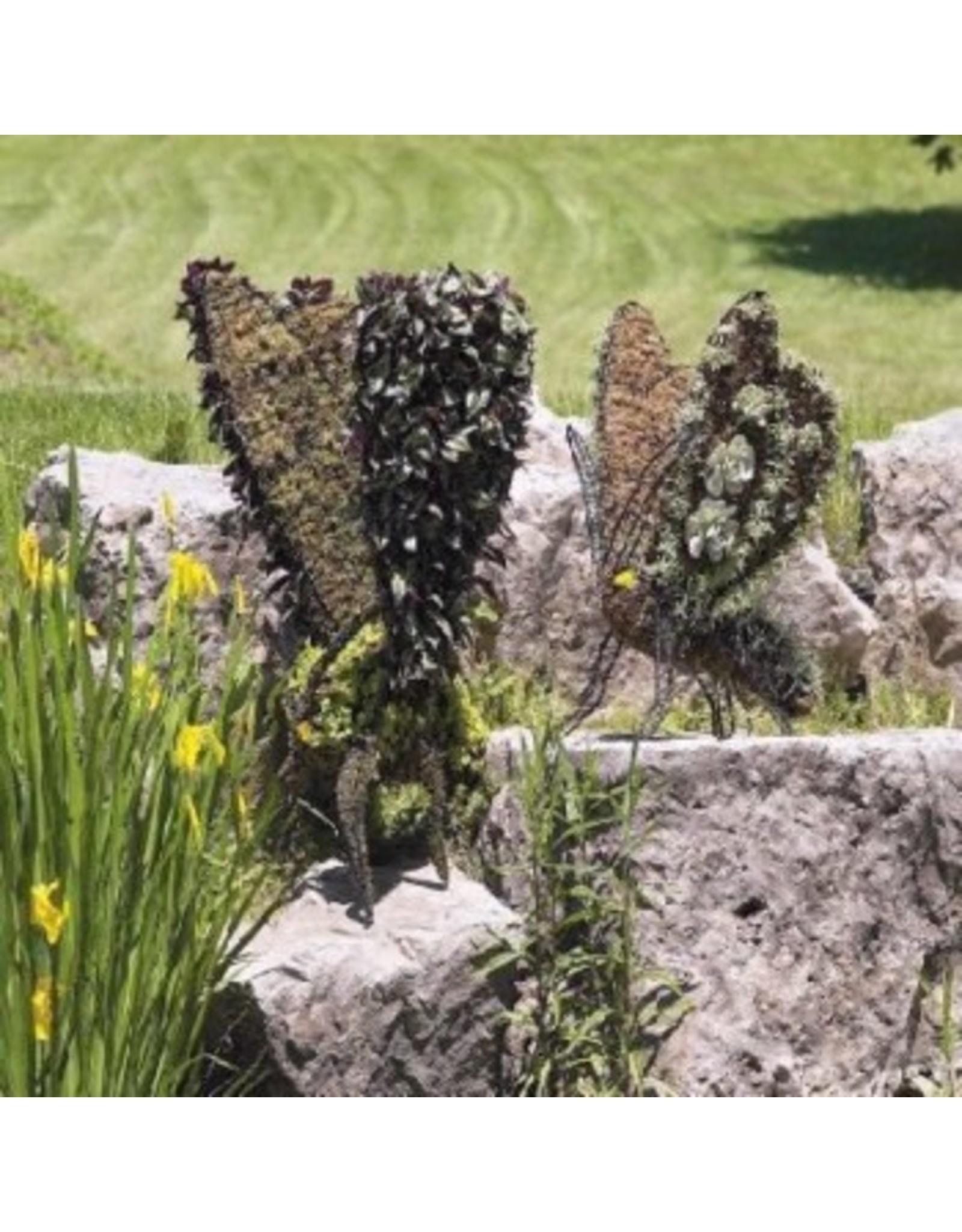 Artopya Butterfly
