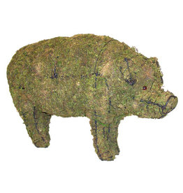 Artopya Pig