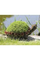 Artopya Turtle