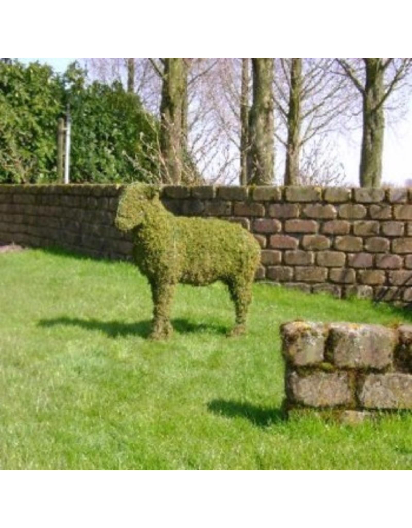 Artopya Sheep