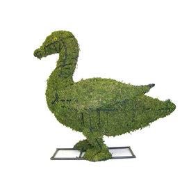 Artopya Duck