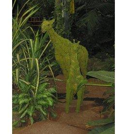 Artopya Giraffe