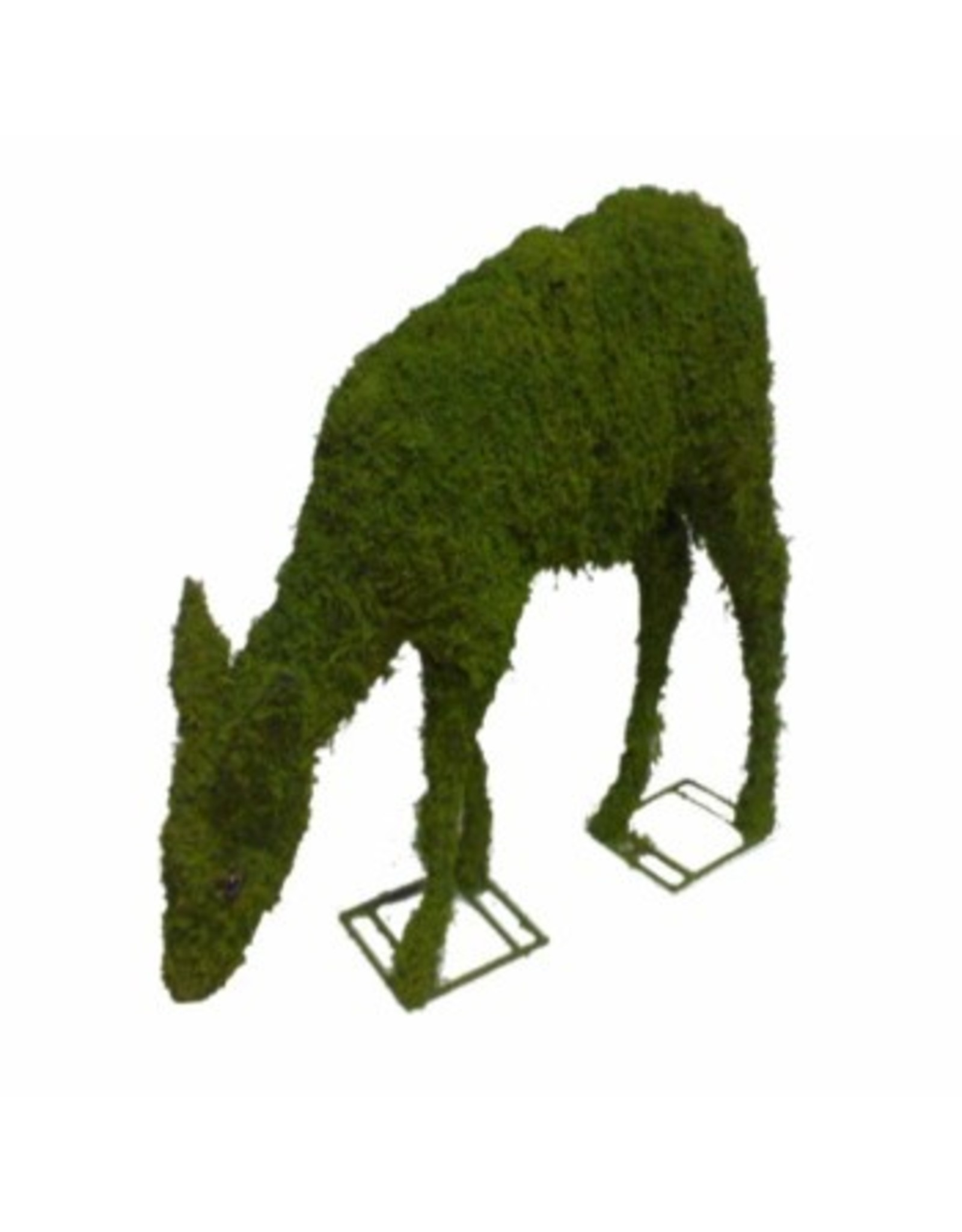 Artopya Deer grazing