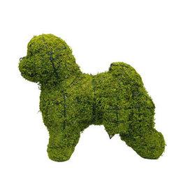 Artopya Dog Bichon Frize