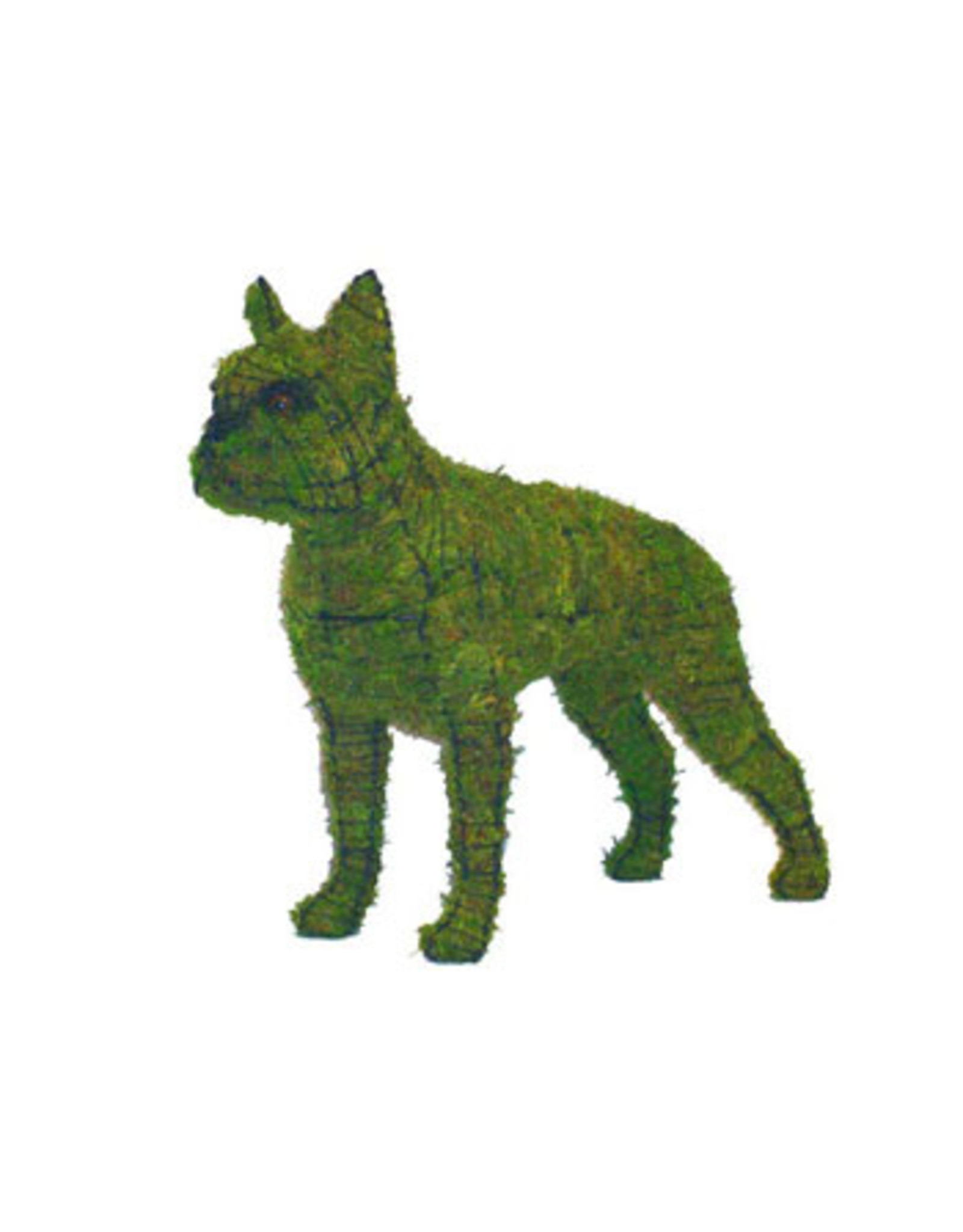 Artopya Hond Boston Terrier