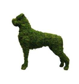 Artopya Dog Boxer