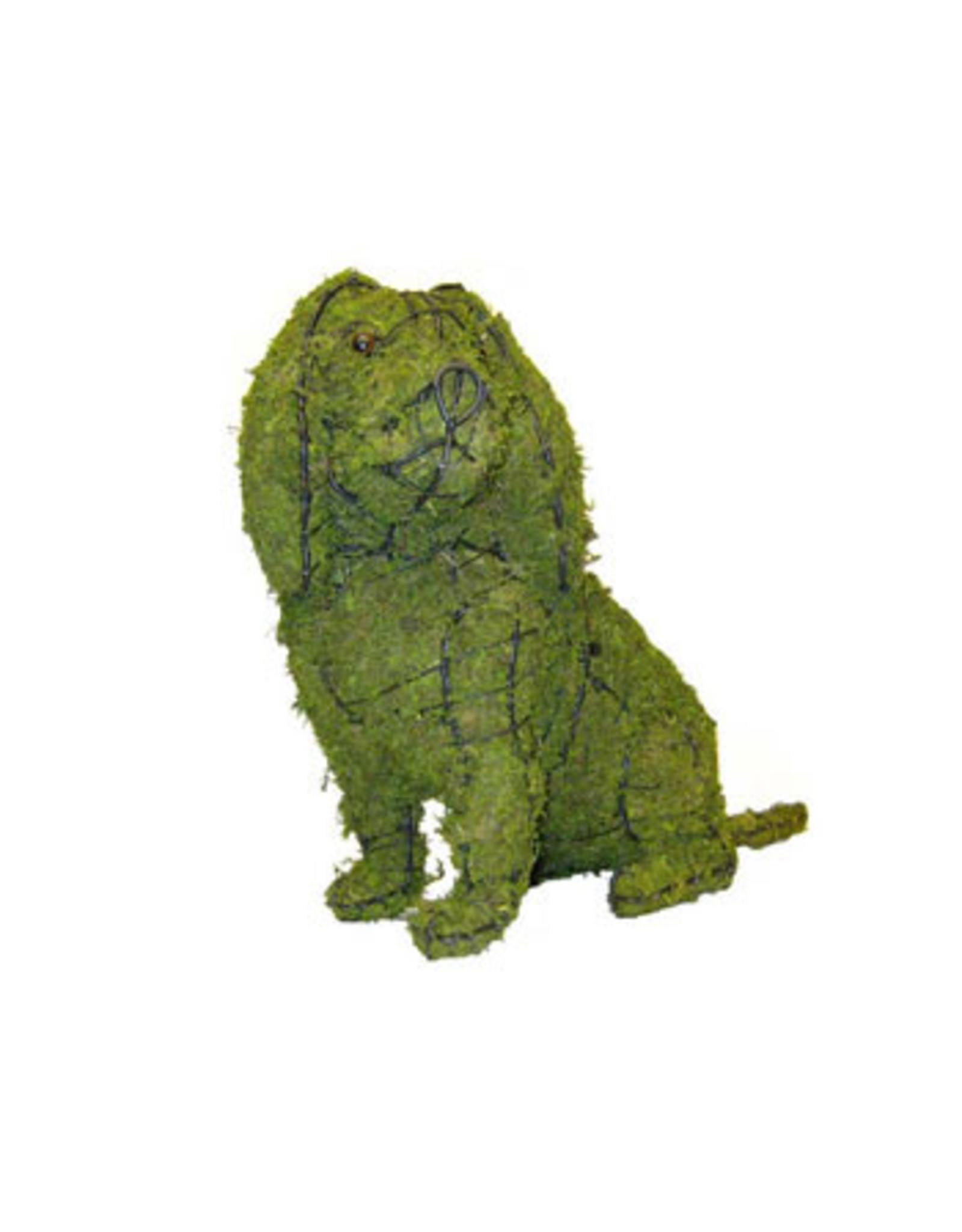 Artopya Hond Cavalier zittend