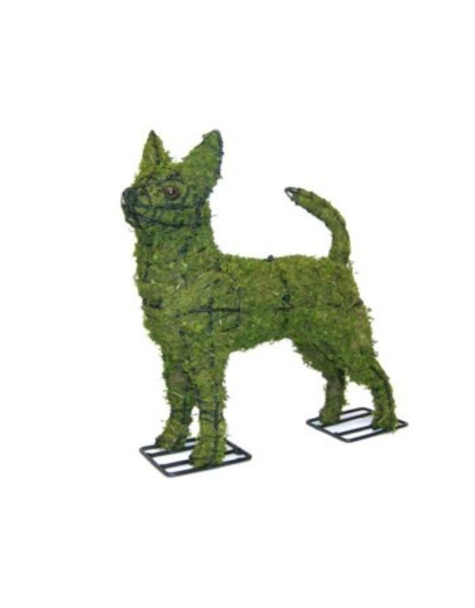 Artopya Chihuahua dog