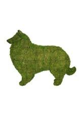 Artopya Dog Collie Scottish Shepherd