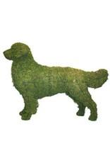 Artopya Dog Golden Retriever