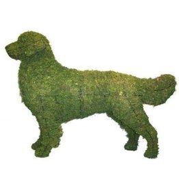 Artopya Hond Golden Retriever