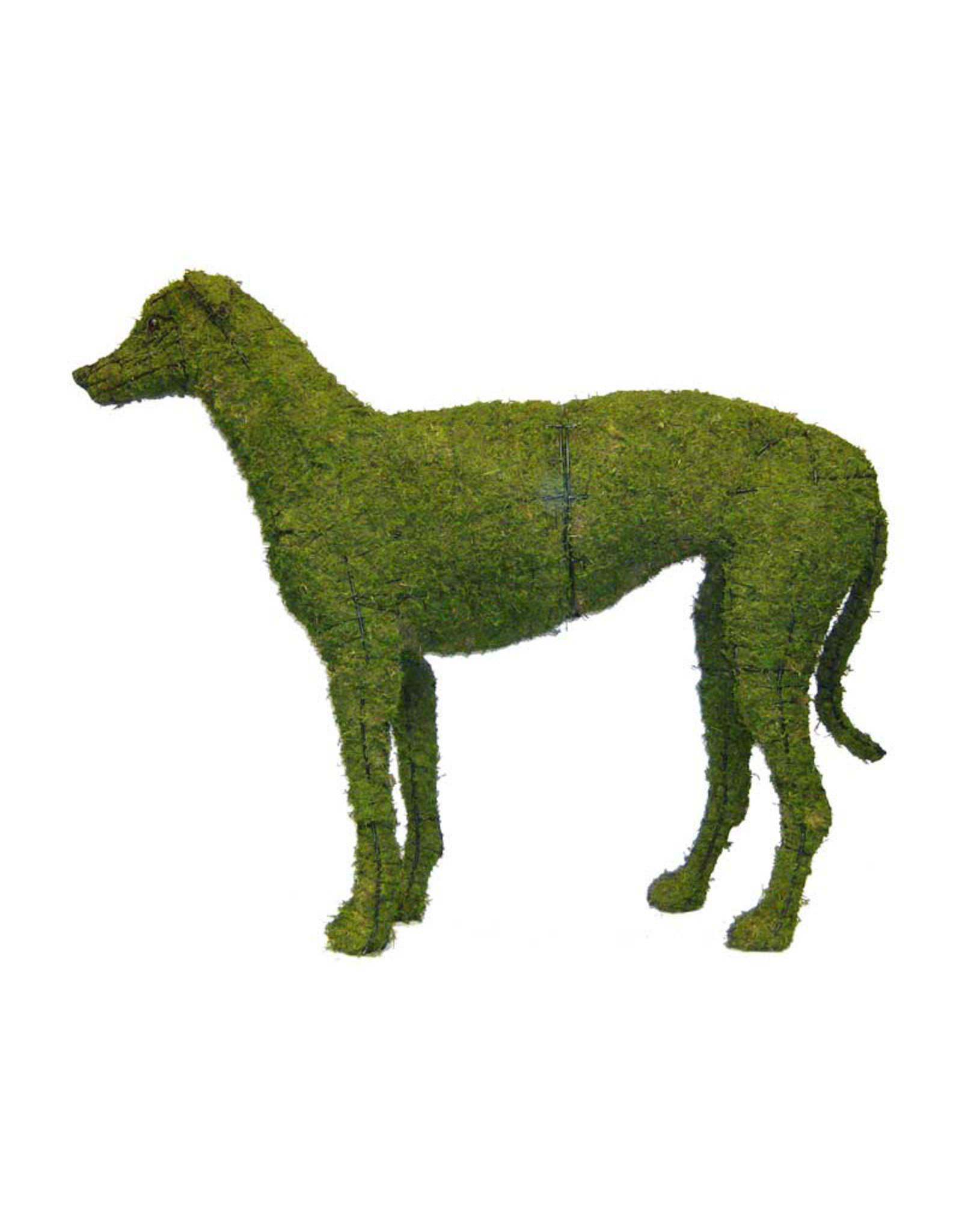 Artopya Hond Hazewind