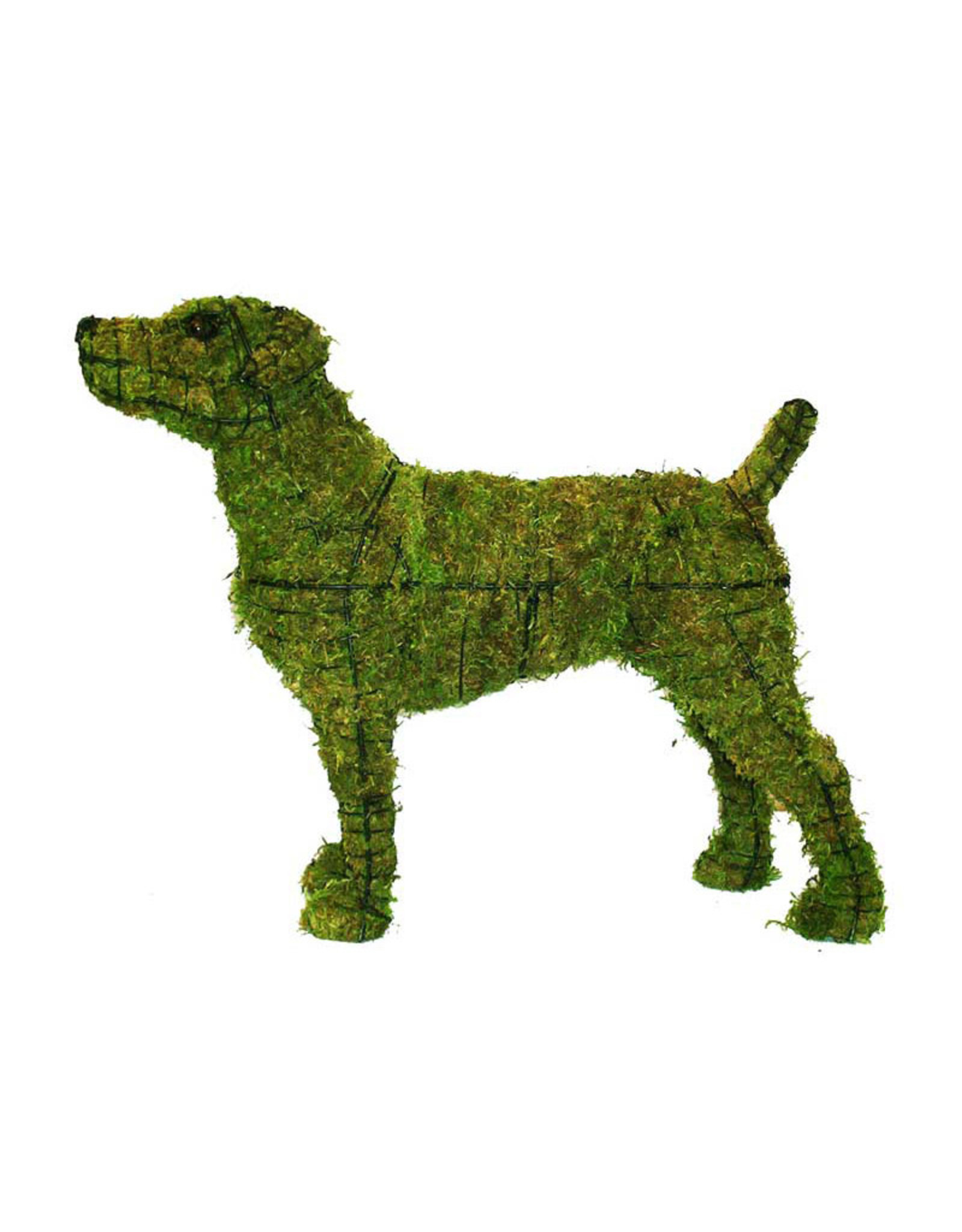 Artopya Dog Jack Russel
