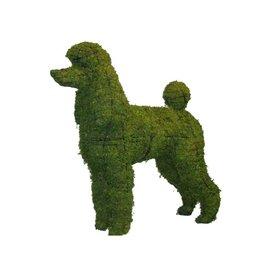 Artopya Dog Poodle