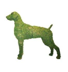 Artopya Weimaraner dog