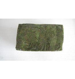 Artopya Moss