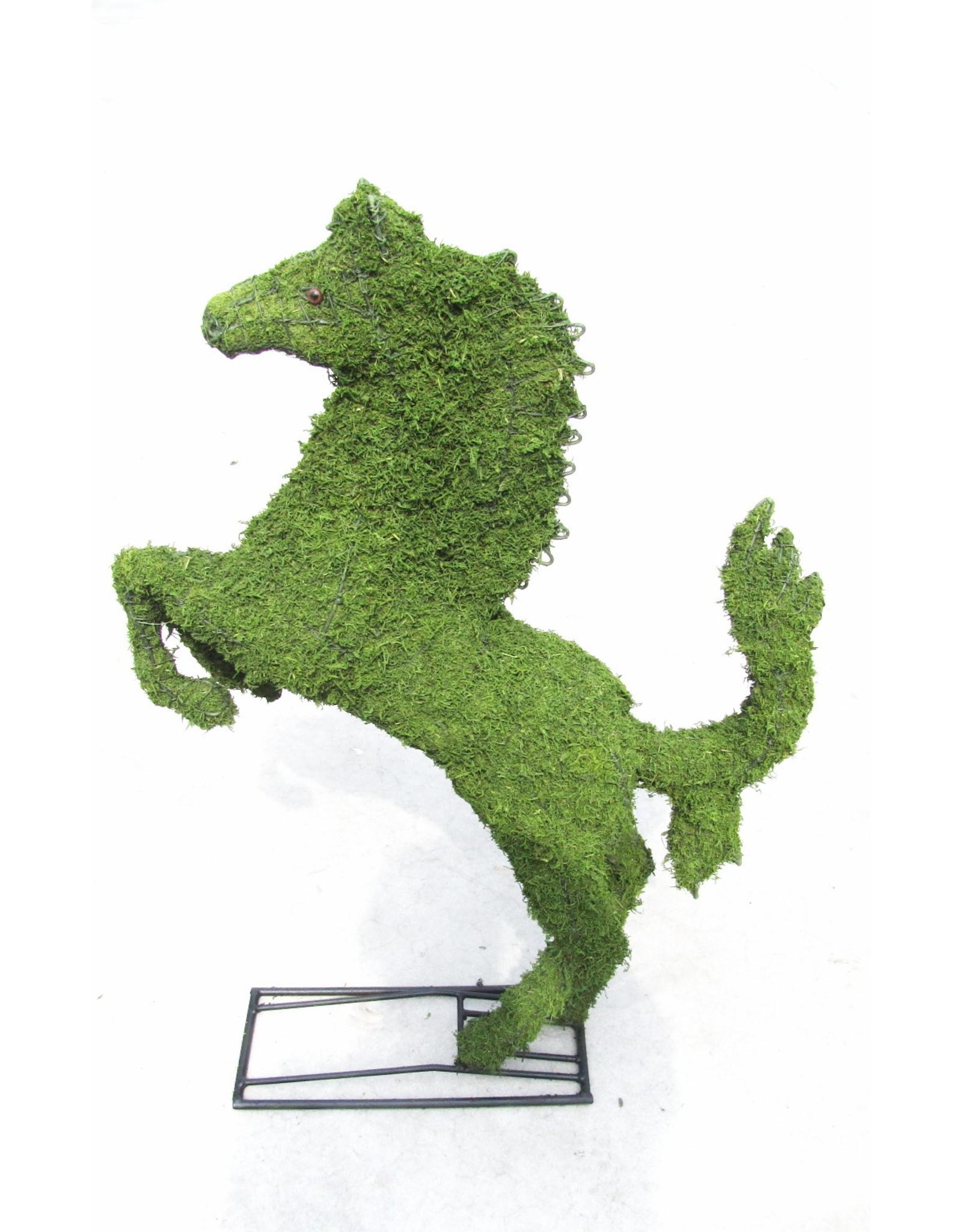 Artopya Horse Rearing