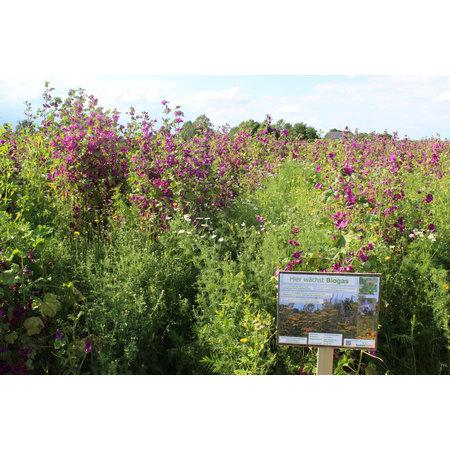 Wildpflanzenmischung BG90 10kg
