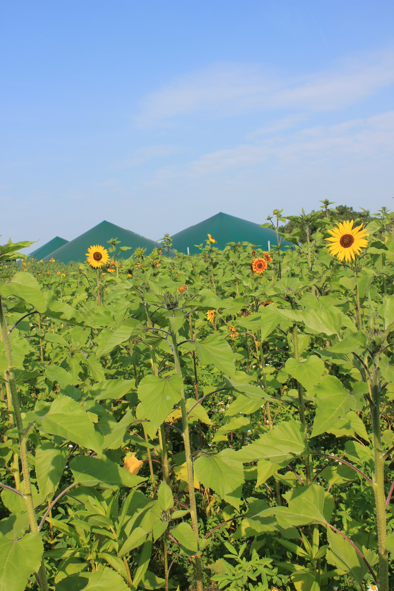 Wildpflanzensaatgutmischung BG 70 10kg