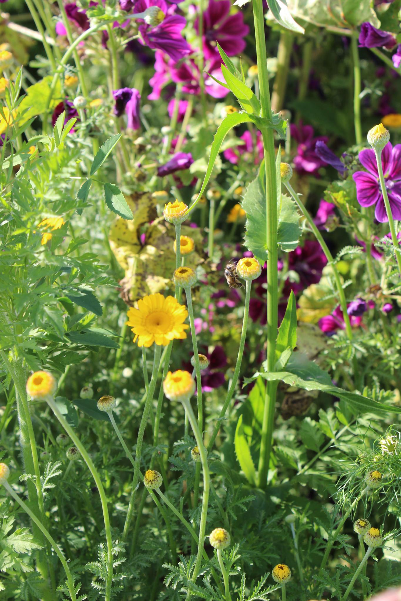 Wildpflanzensaatgutmischung LJ-Blüh-Opti 10kg - Copy