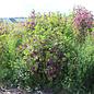 Wildpflanzenmischung LJ- Ertrags-Opti 10kg