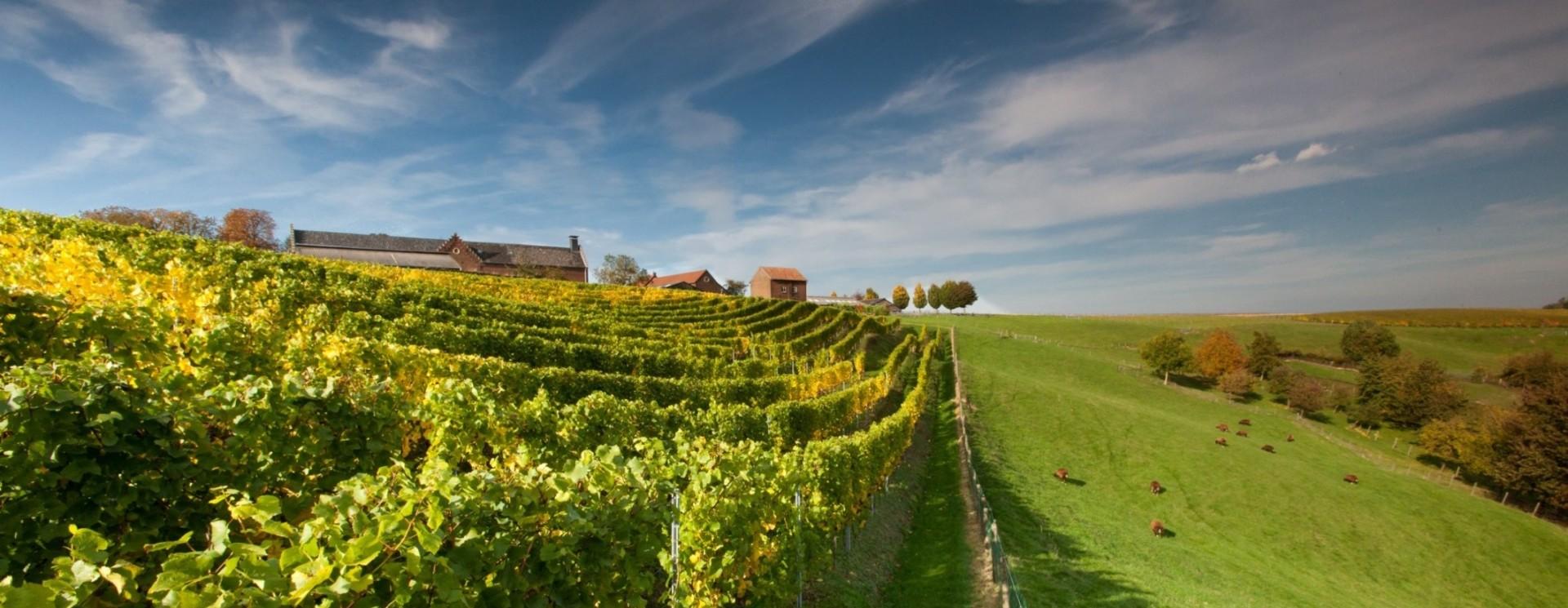 de Wijngaardsberg