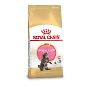 Royal canin Royal canin kitten maine coon