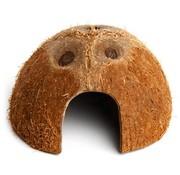 Komodo Komodo coconut den