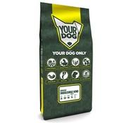 Yourdog Yourdog servische driekleurige hond senior