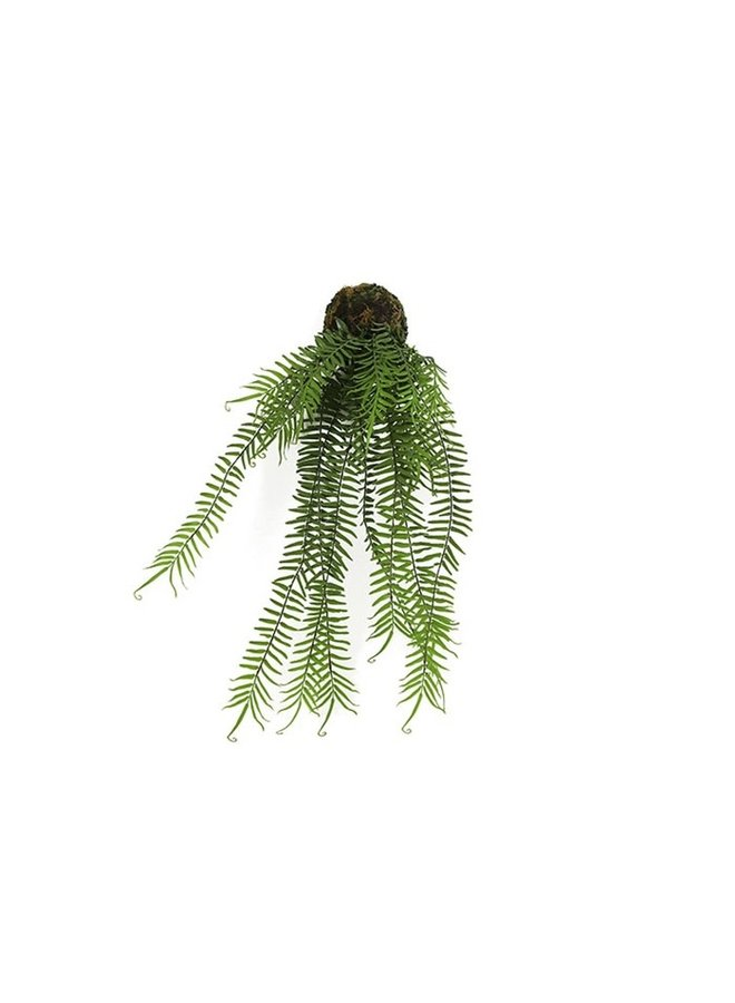 Monilophyta S groen