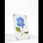 studio carmela bogman flowerframe  -small