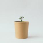 plant it | in 3 stappen je eigen kruidenthee laten groeien