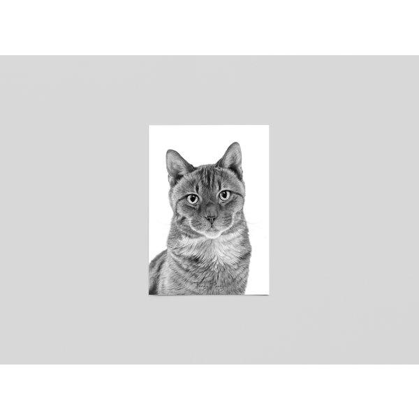 Ferdy Remijn Postkaart Pooky, Britse kort haar - Ferdy Remijn