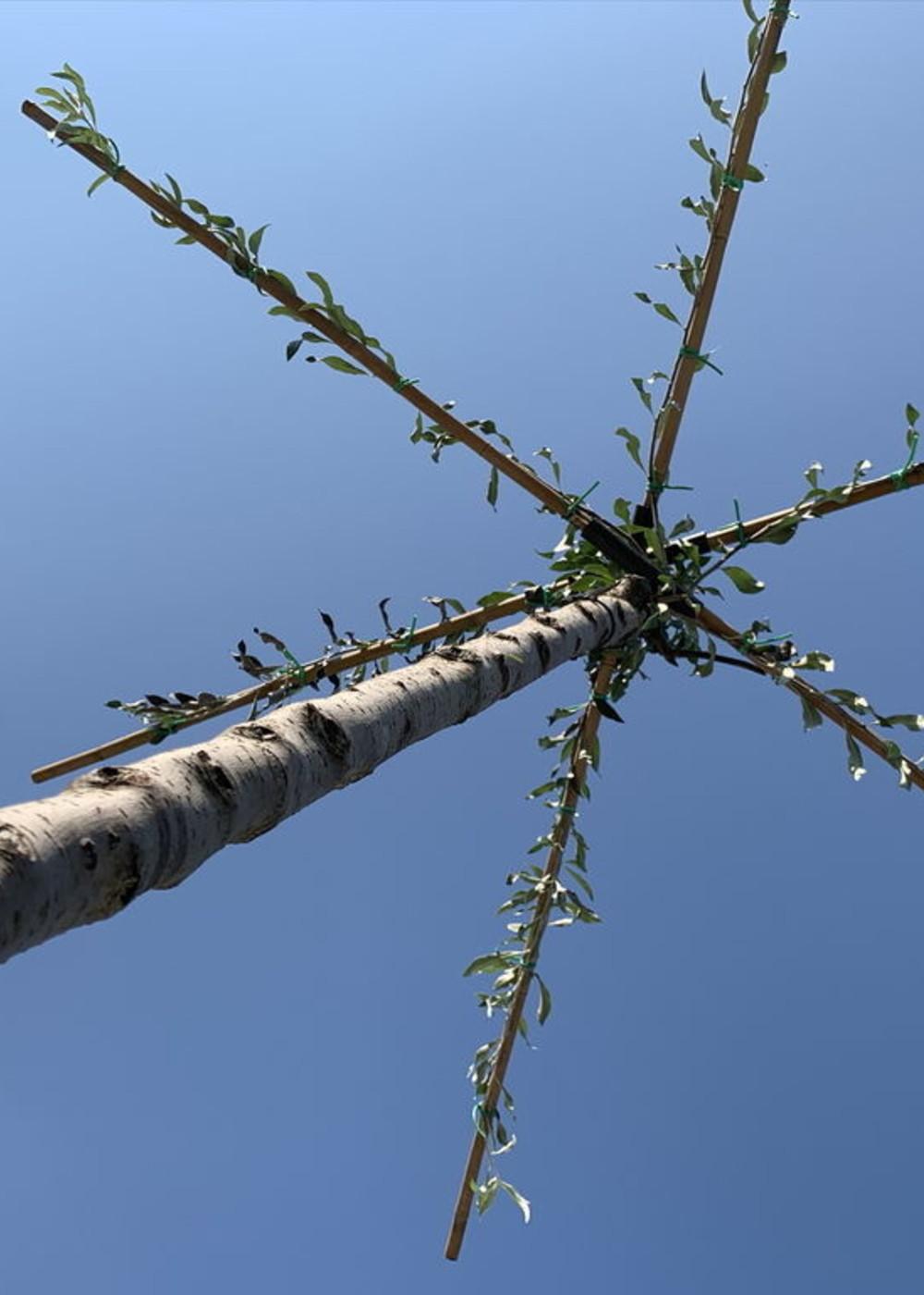 Weidenblättrige Birne Dachbaum | Hängende Wildbirne | Pyrus salicifolia 'Pendula' Dachbaum