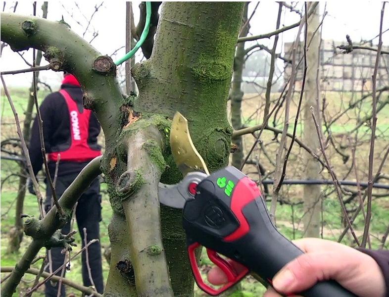 Wann dürfen Bäume geschnitten werden?