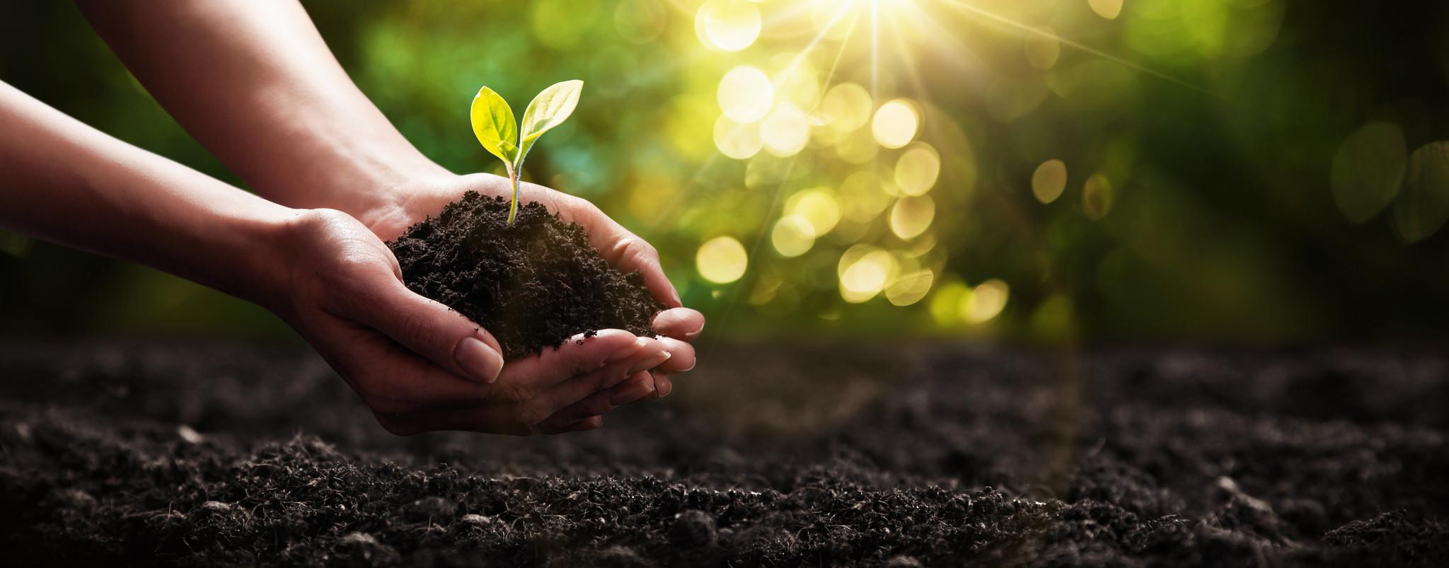 Wann sollte  man einen Baum pflanzen?