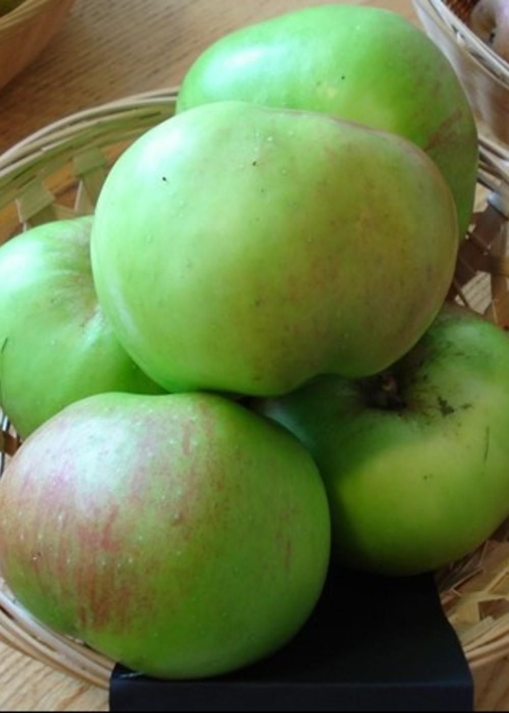 Apfel 'Bramley's Seedling'   Malus domestica 'Bramley's Seedling'