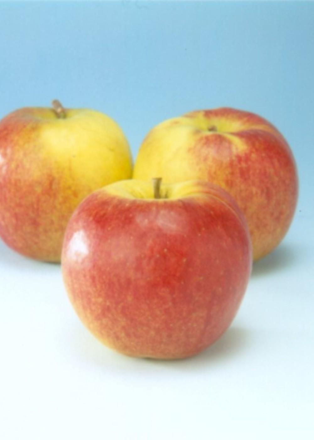 Apfel 'Jonagold' | Malus domestica 'Jonagold'