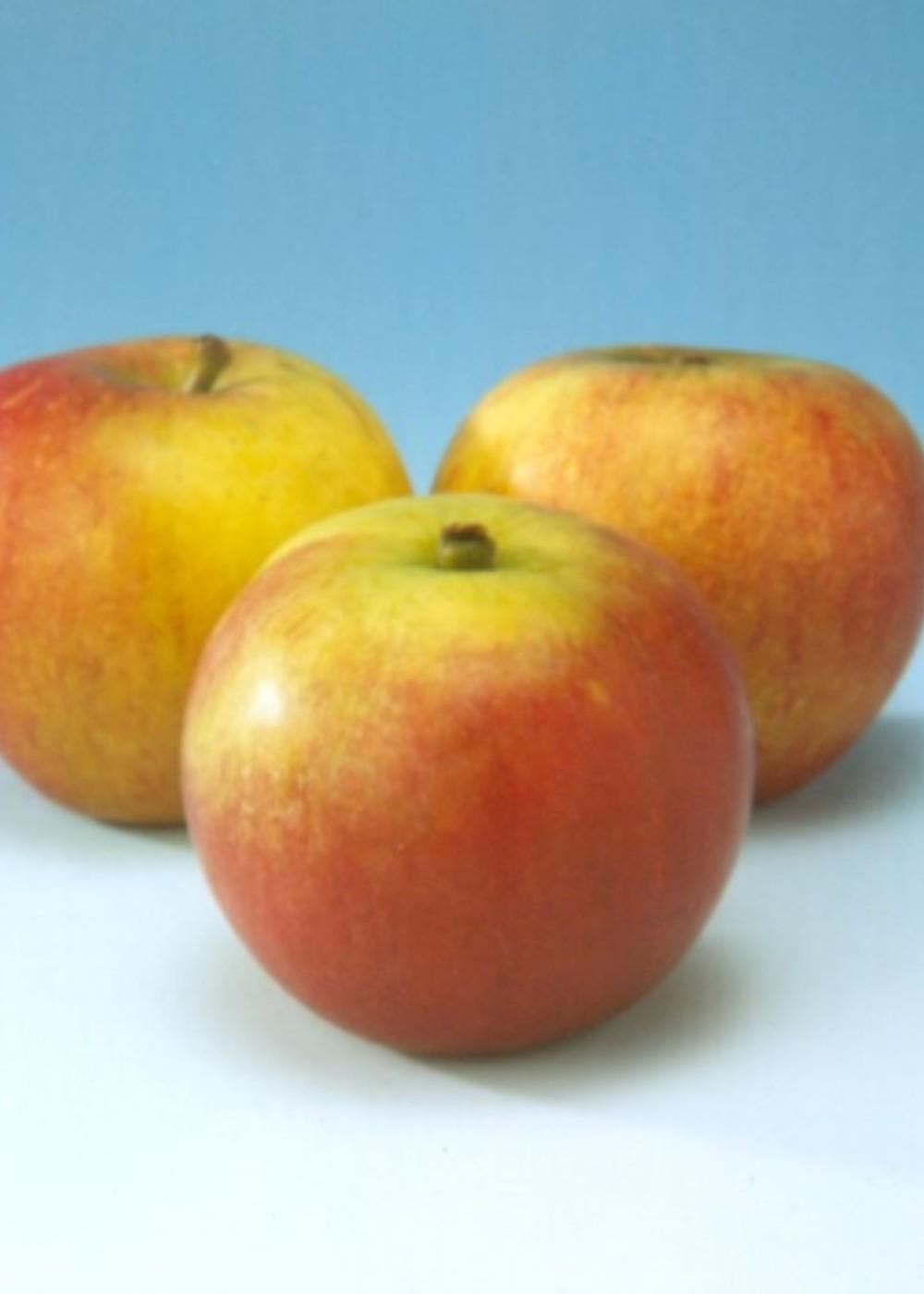 Herbstapfel 'Cox Orange Pippin' | Malus domestica 'Cox Orange Pippin'