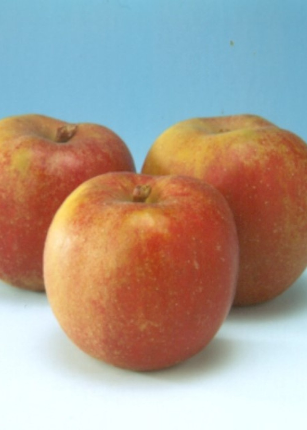 Apfel 'Rode Boskoop' | Malus domestica 'Rode Boskoop'