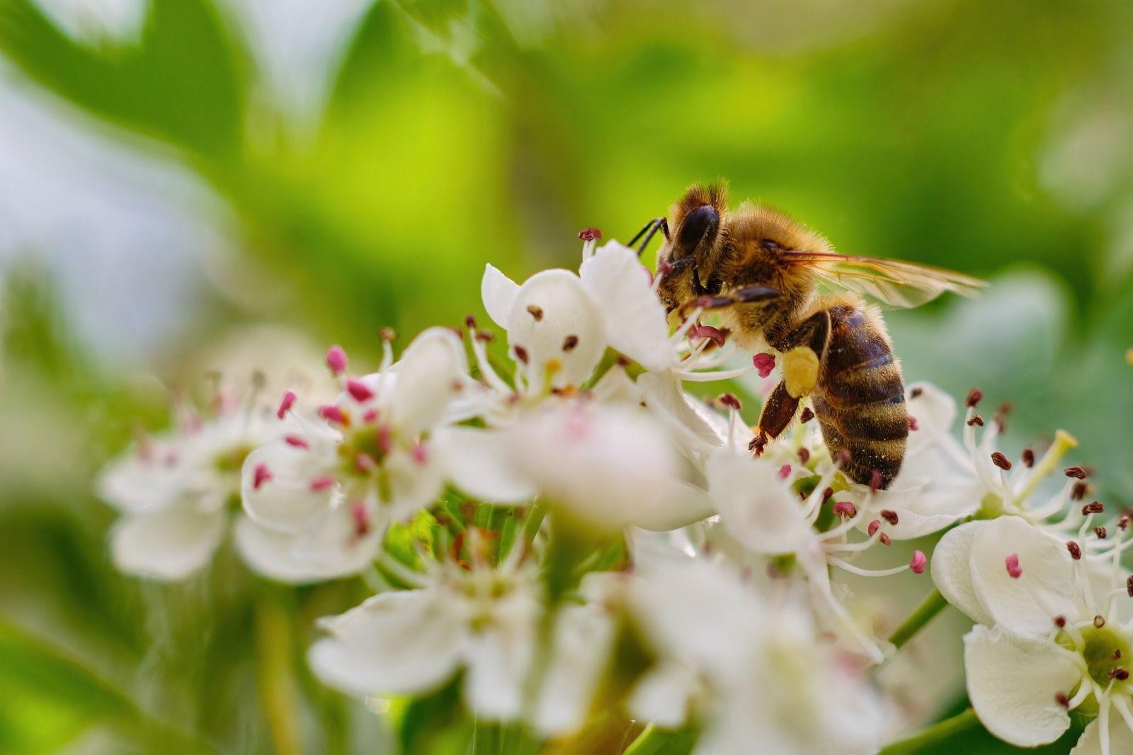 Welche Bäume sind für Bienen, Schmetterlinge und andere Insekten besonders geeignet?
