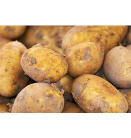 Aardappelen ras Agria Licht Bloemig (Klein Broekhuizen)