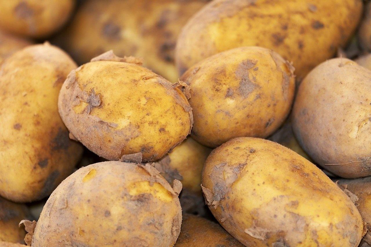 Aardappelen ras Agria Licht Bloemig | 1kg (Klein Broekhuizen)